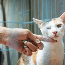 Behöver ni en veterinär till era djur?